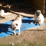 1. Kuka y Pancho antes de ser rescatados