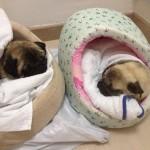 10. Gusy y Zoe operados