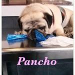 15. Pancho en el veterinario