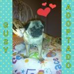 16. Gusy adoptado (ahora Franky)