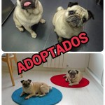 2. Adoptados