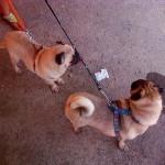 2. Cami y Gus rescatados