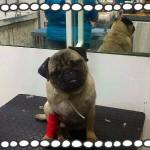 2. Xei en el veterinario