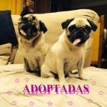 20. adoptadas