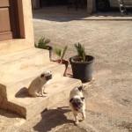 4. Bimba y Lola