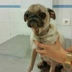 4.veterinario