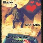 7. adoptada