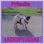 8. adoptada (ahora Lola)