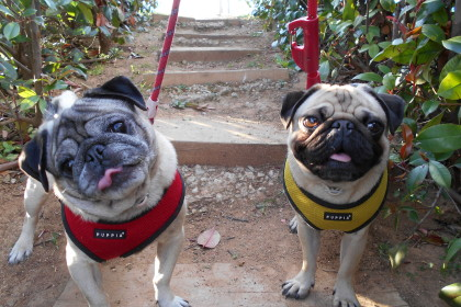 Bruno y Rocky