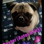 Dexter (7)