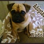 Rudolf (12)