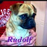 Rudolf (7)