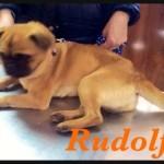Rudolf (8)