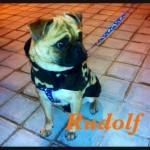 Rudolf (9)