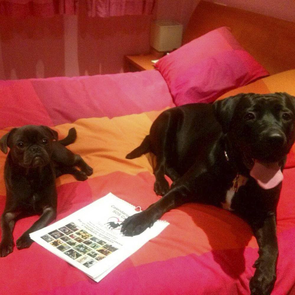 NOA (ADOPTADA EN SOS CARLINOS) & LUNA