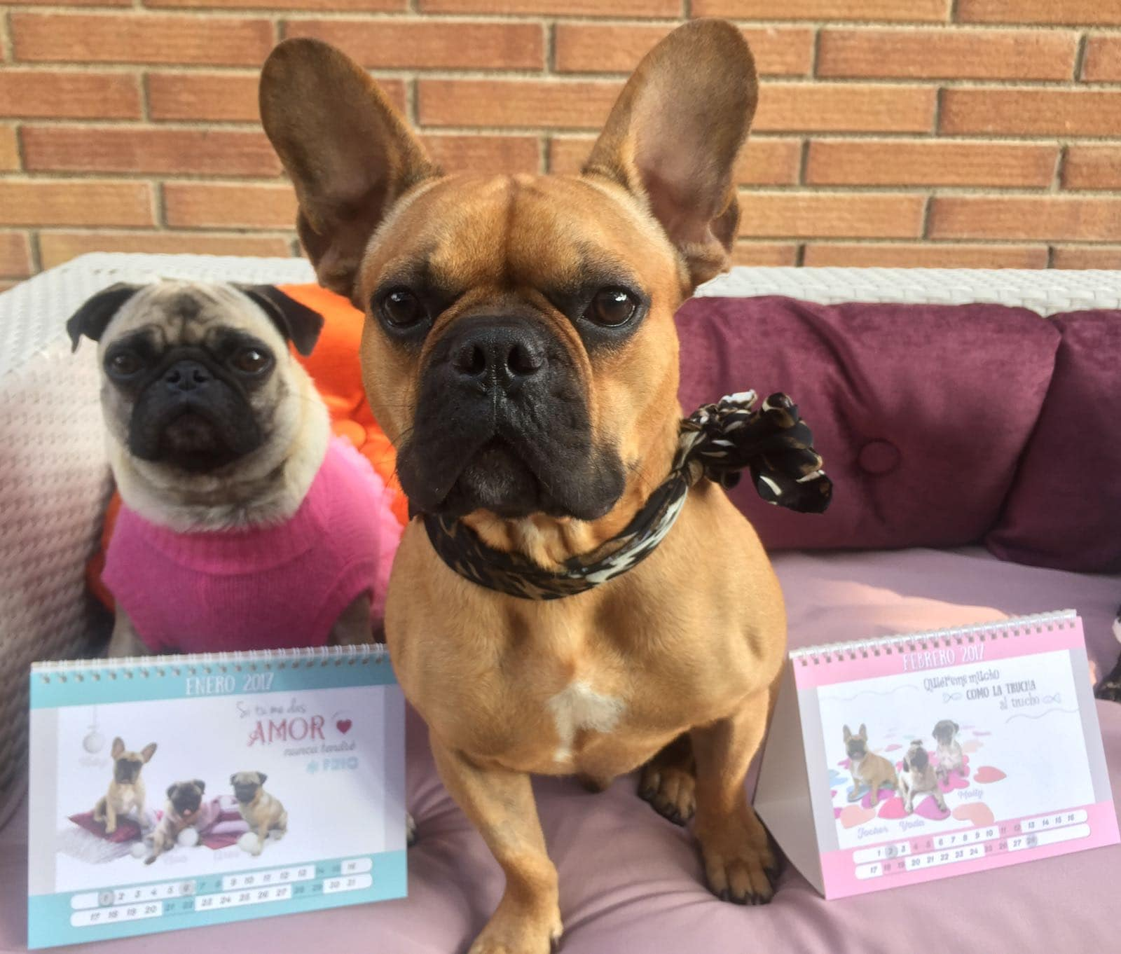 Curro & Pinky