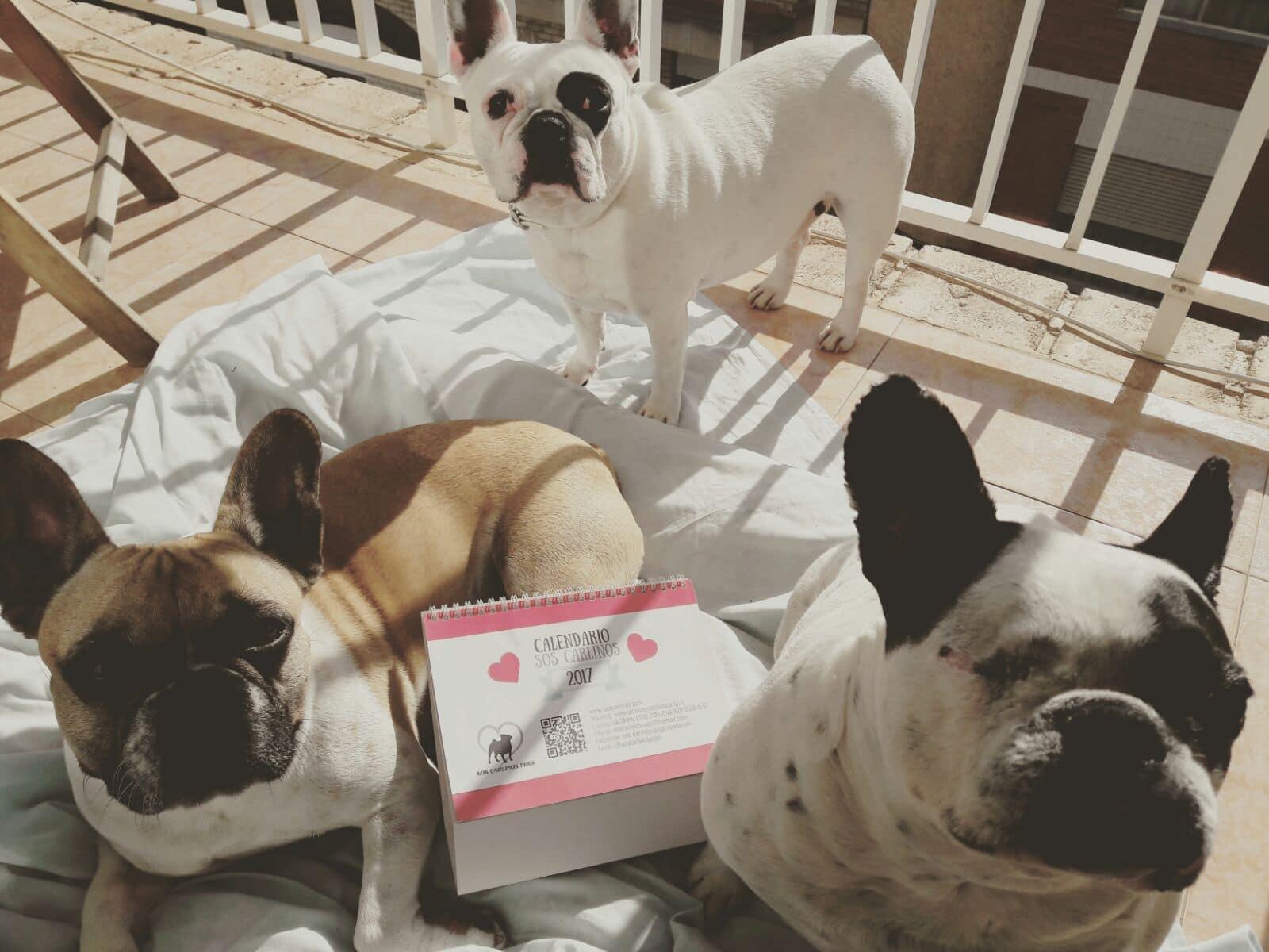 Andy, Coco y Estela